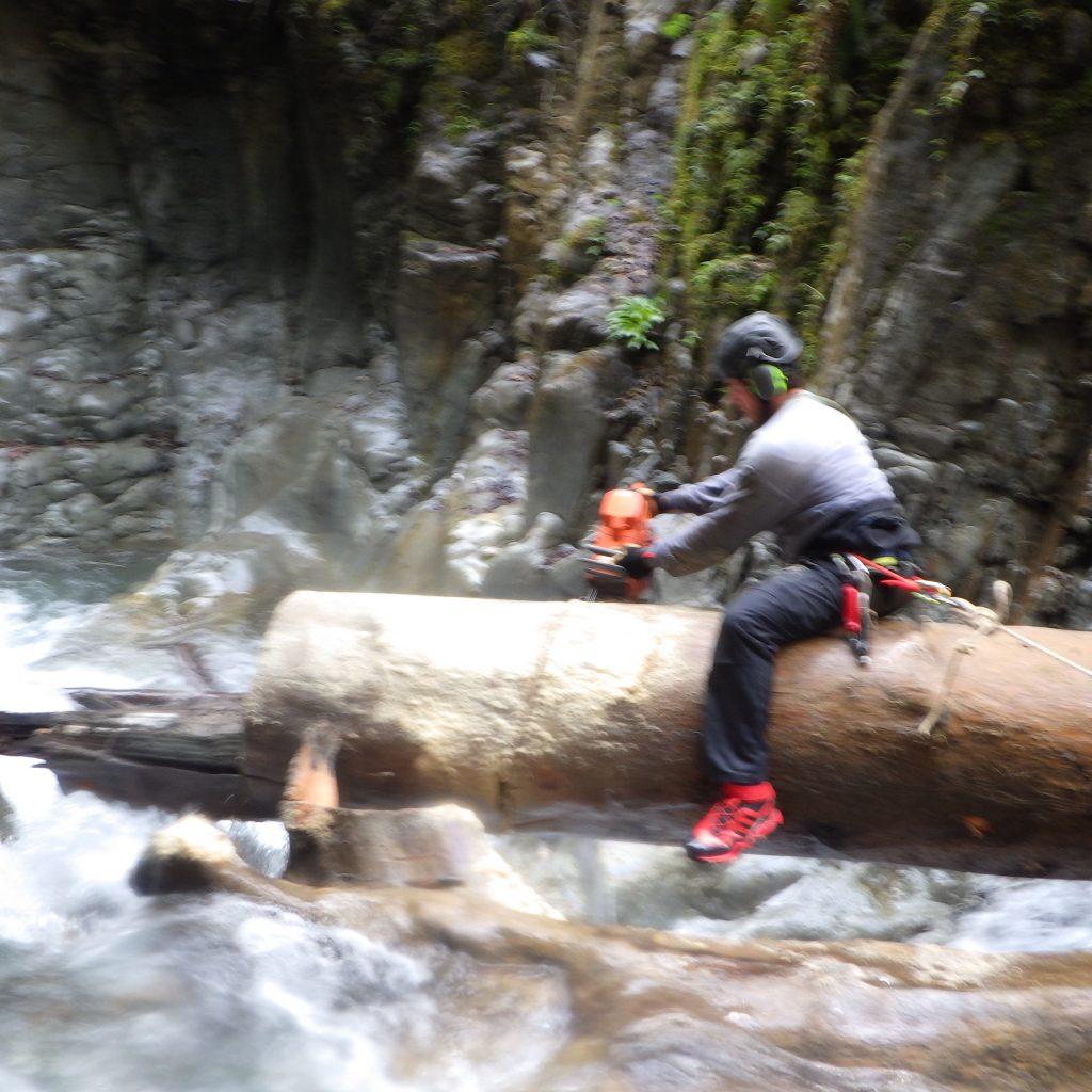 tronçonnage d'un arbre en rivière