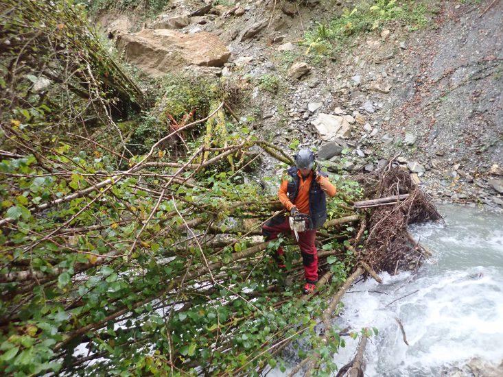 tronconnage de noisetiers dans le cadre du gemapi et de la gestion des berges et cours d'eau
